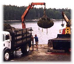 hoisting freshly harvested loads onto trucks for shipping